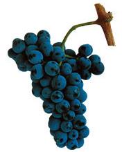 engelsk musserende vin